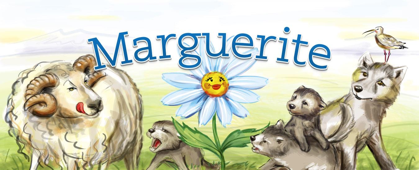 Baldursbrá_Marguerite_Harpa_topb_1350x550px